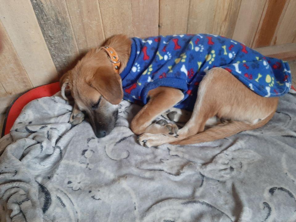 Un perrito busca nuevo hogar luego de que su dueña muriera por coronavirus