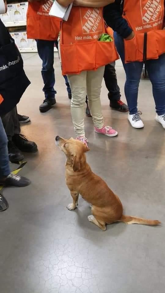 Perrito callejero encontró casa y empleo; ya tiene hasta uniforme