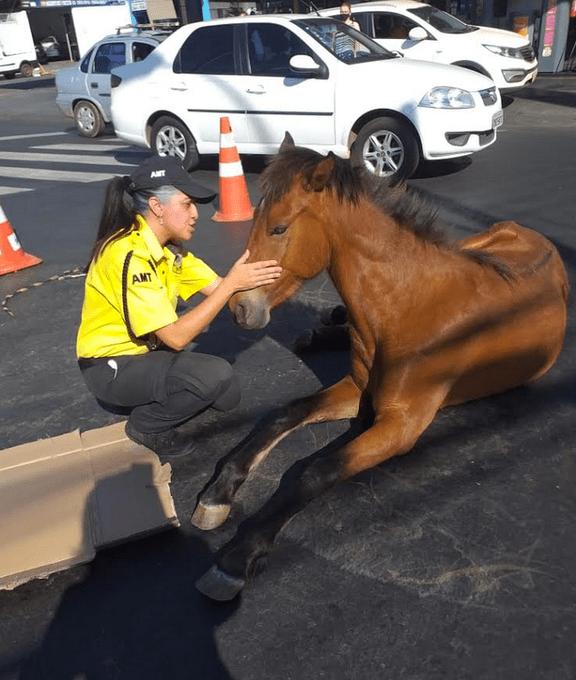 ¡Heroína! Atropellan a una yegua y es atendida por una policía de tránsito
