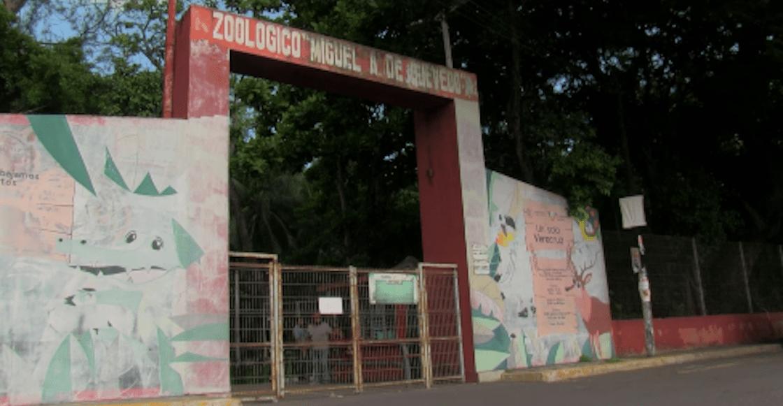 zoologico-miguel