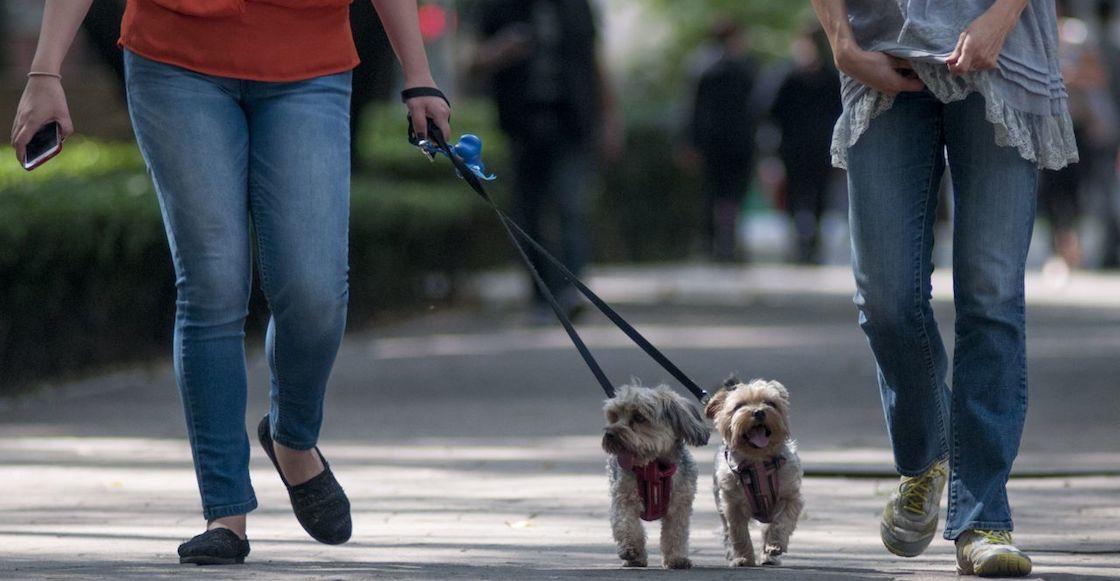 que-huelen-perros-pasear-unam