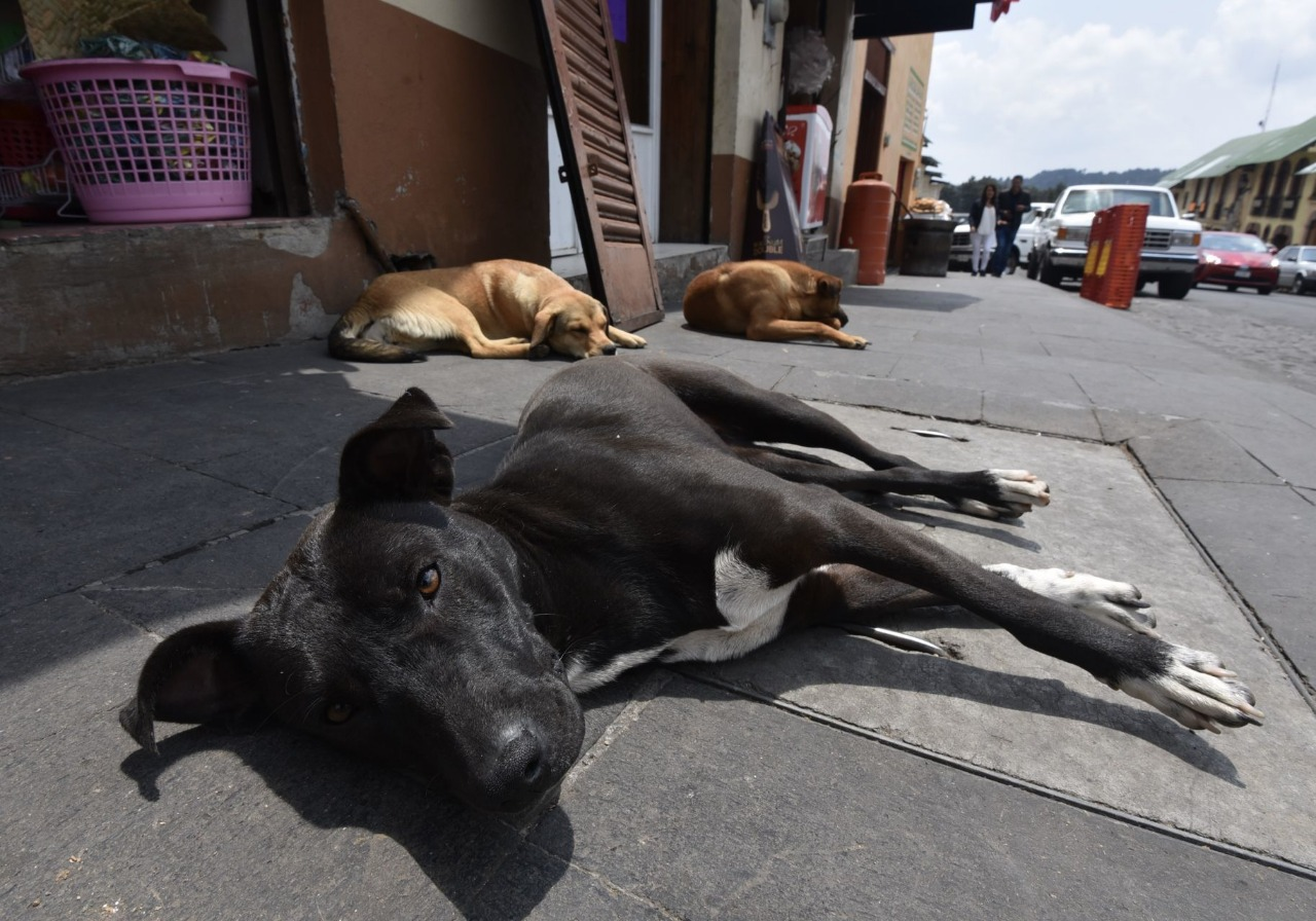 Buscan a chofer de microbús acusado de atropellar injustificadamente a perrito en Naucalpan