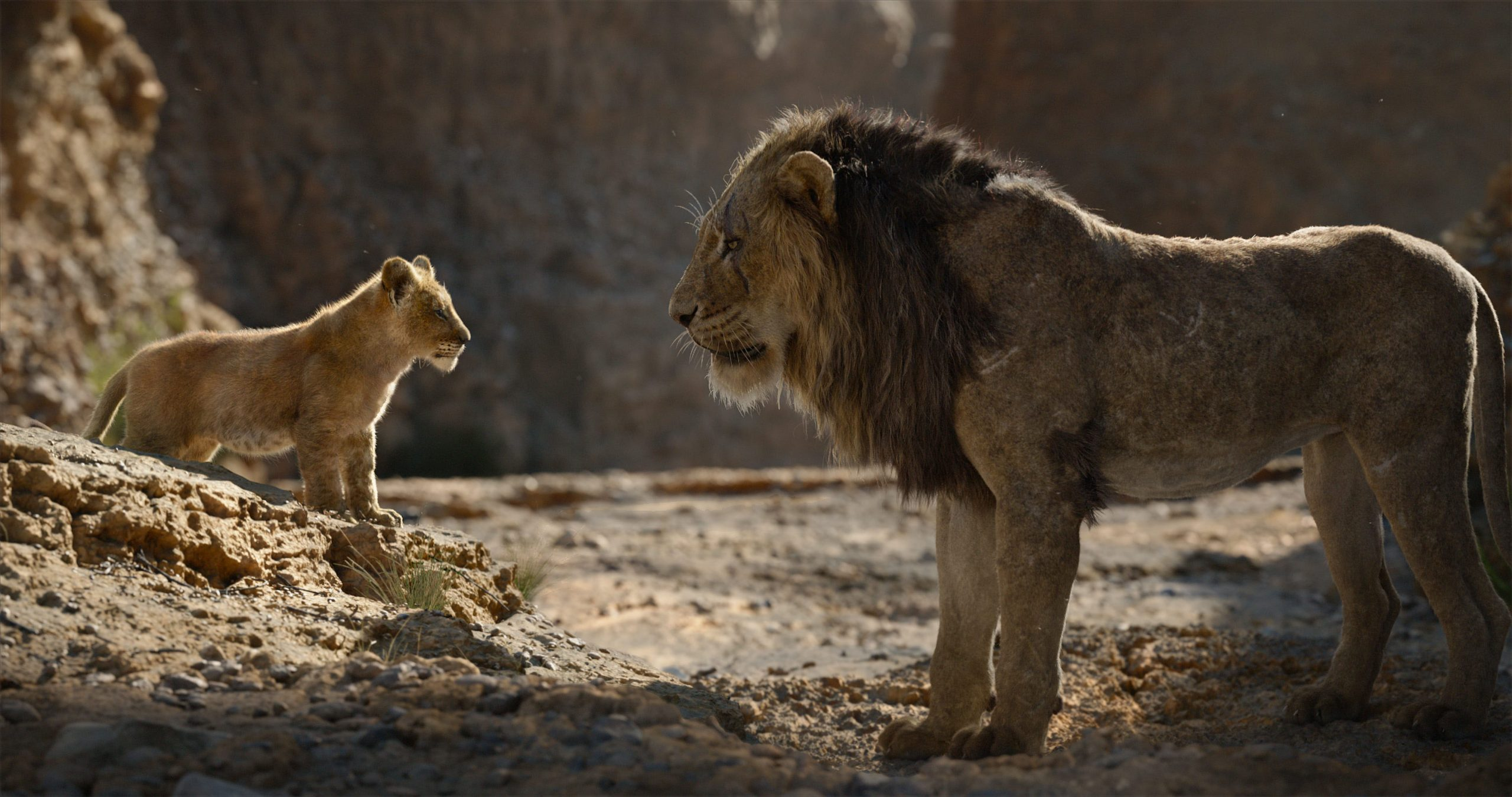 ¿El padrino II? Habrá una segunda parte en live action de 'El rey león'