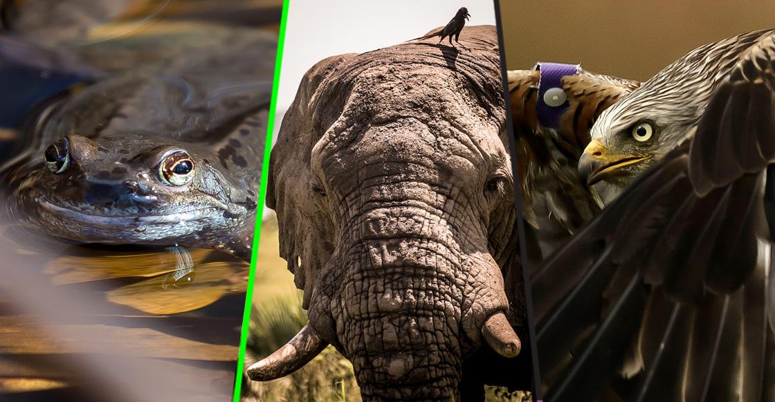 ¿Qué sigue? Los humanos hemos terminado con dos terceras partes de la vida silvestre en los últimos 40 años