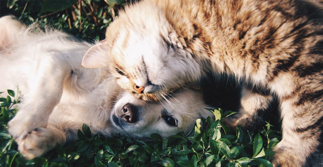 mascotas-perro-gato-humanos