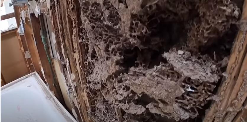 Nadie sabe para quién trabaja: Compra casa por medio millón de dólares y se la devoran las termitas