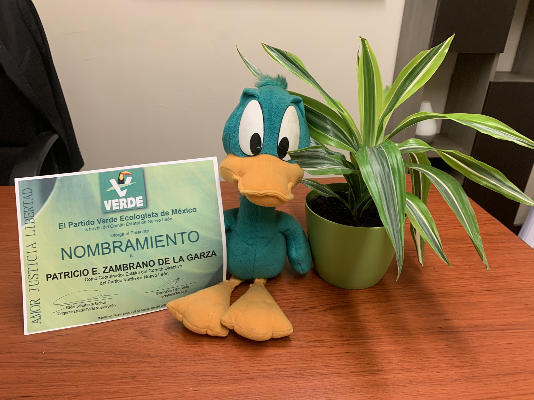 Pato Zambrano, PArtido Verde