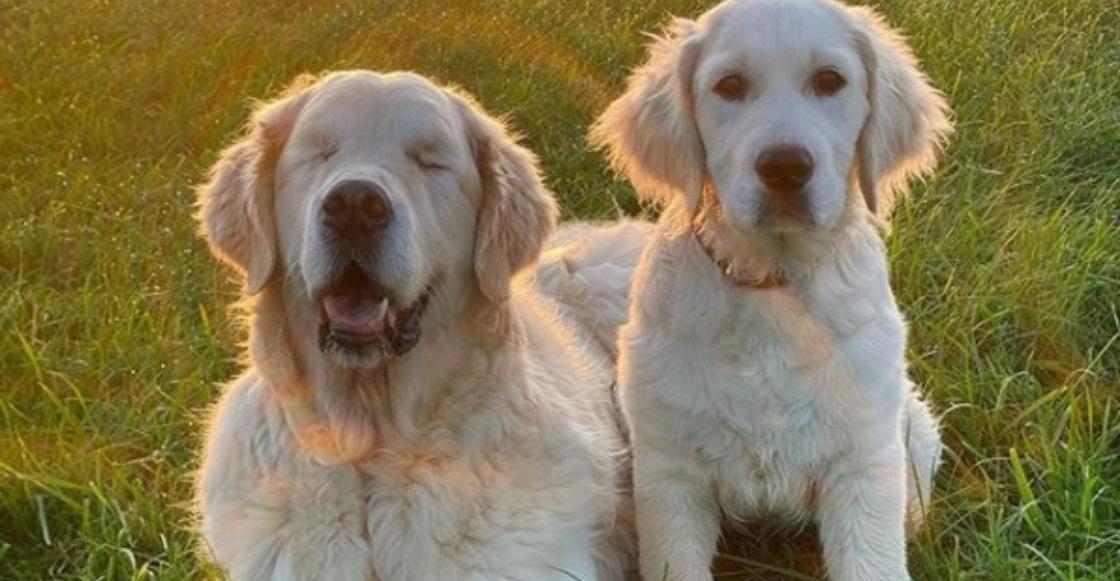 Héroes peludos: perrito con ceguera recibe ayuda de otro cachorro