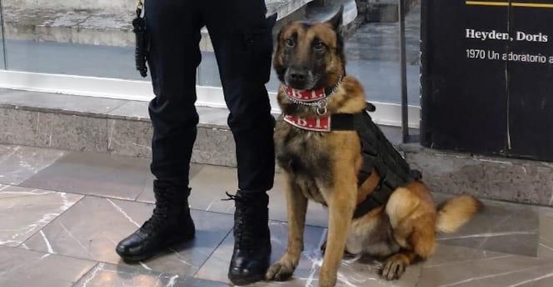 perritos-metro-seguridad