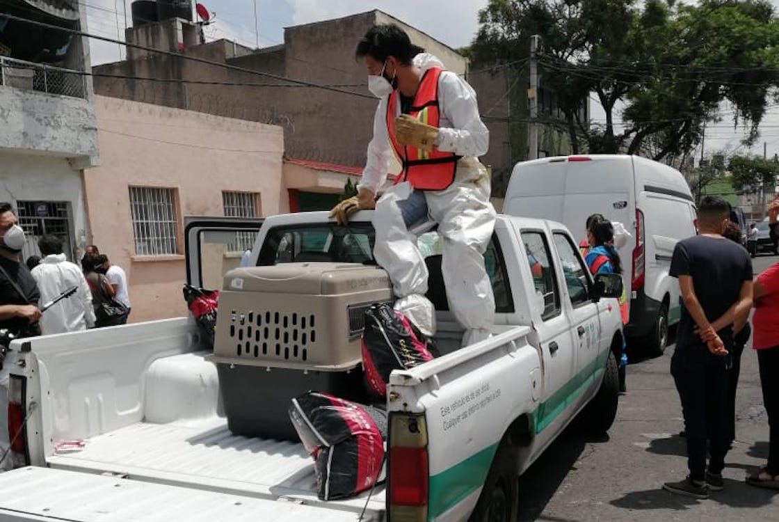 rescate-cdmx-perritos