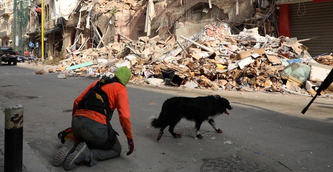 rescatistas-perrito-beirut-libano-explosion