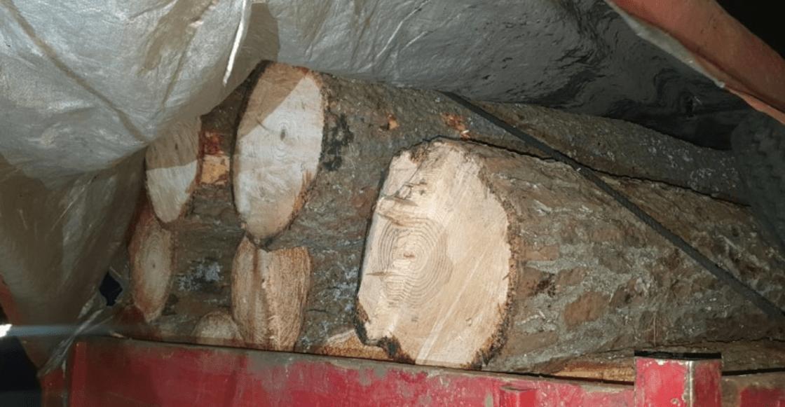 troncos-arboles-cdmx-ssc