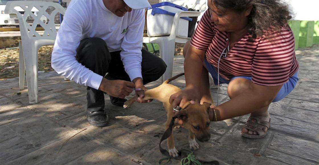 vacuna-perros-rabia-gatos