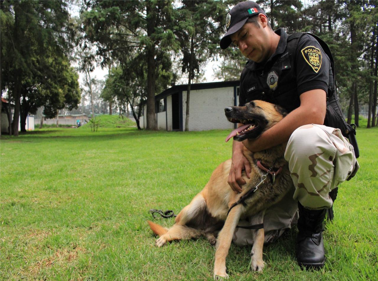 brigada-vigilancia-animal-cdmx