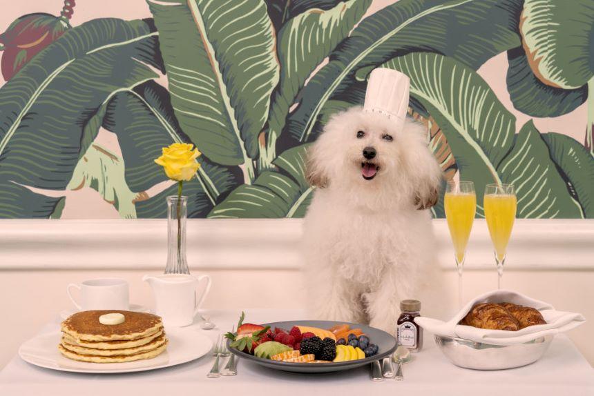 ¡Ternuringa! Gray Malin retrata la vida de los peludos en el hotel para perros