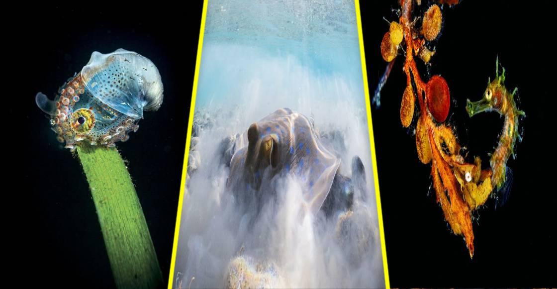 Las mejores fotografías submarinas del concurso 'Trough Your Lens' 2020