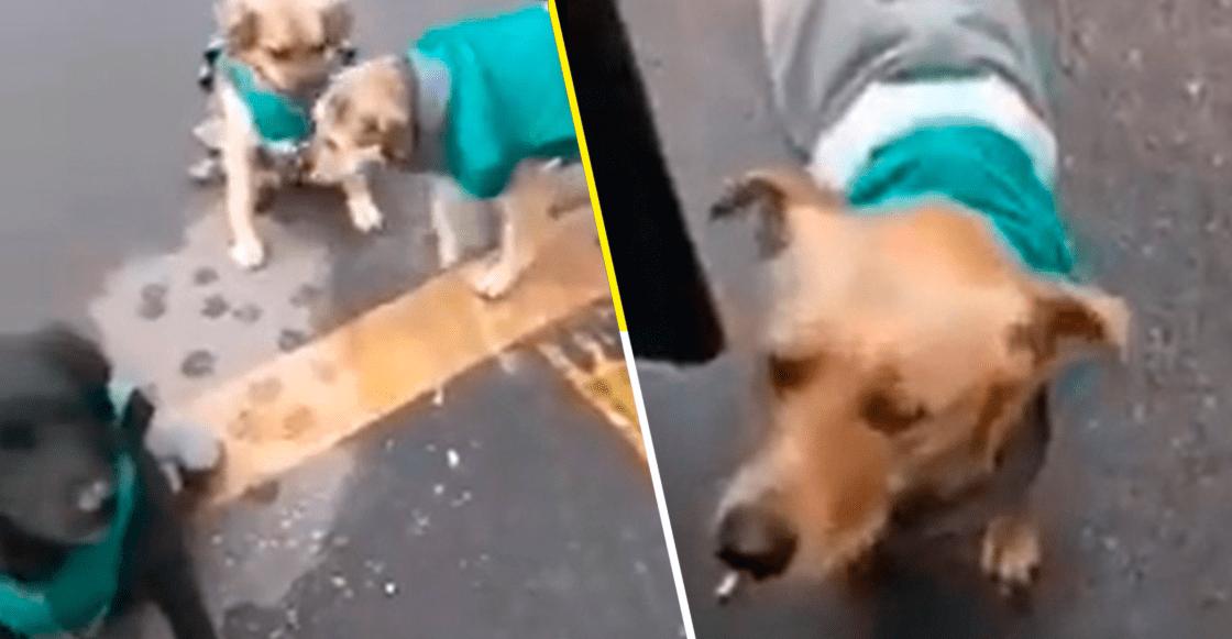 ¡Hermoso! Empresa de transporte 'contrata' a perritos callejeros para acompañar a choferes
