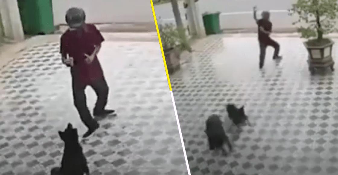 Así como el señor Miyagi: Hombre se defiende del ataque de dos perros al estilo 'Karate Kid'