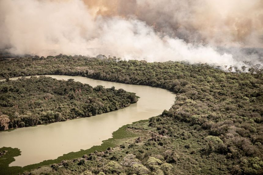 Brasil usa piel de tilapia para curar a los animales quemados por los incendios en el Pantanal