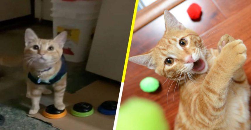 """¡Meaw! Conoce a Kyo, el único gato que """"se comunica"""" con su dueña"""