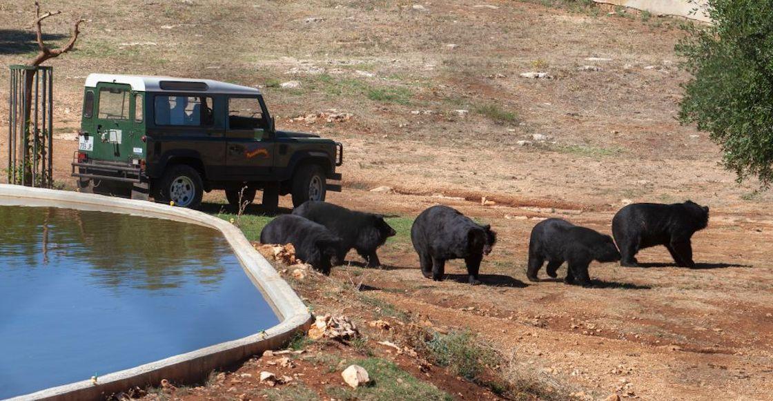 osos-china-ataque-cuidador