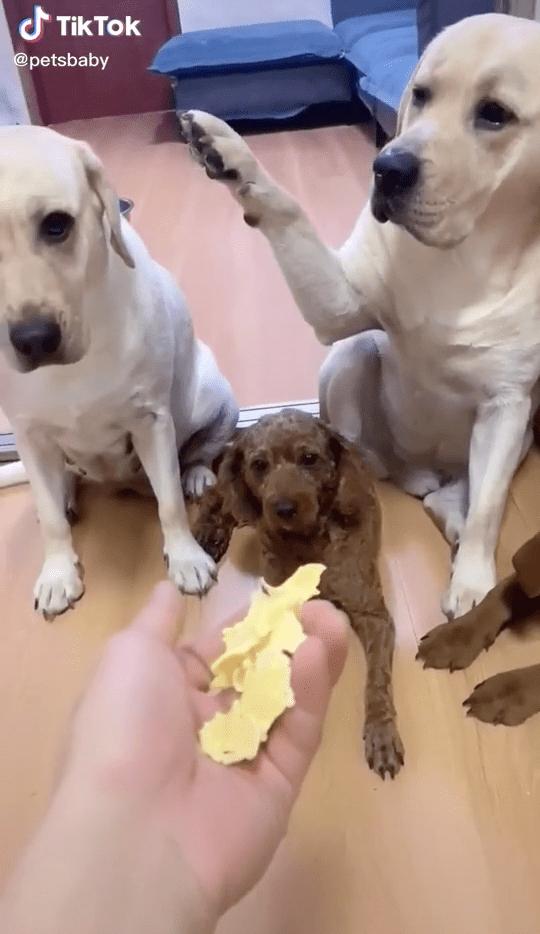 La traición: Perrito acusa a otro de causar destrozos en casa (y el video es una joya)