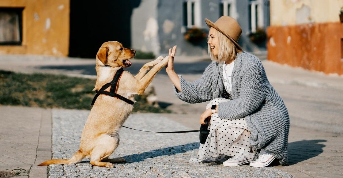 ¡Khé! Mujer en Nuevo León intenta adoptar legalmente a su perrito para darle sus apellidos