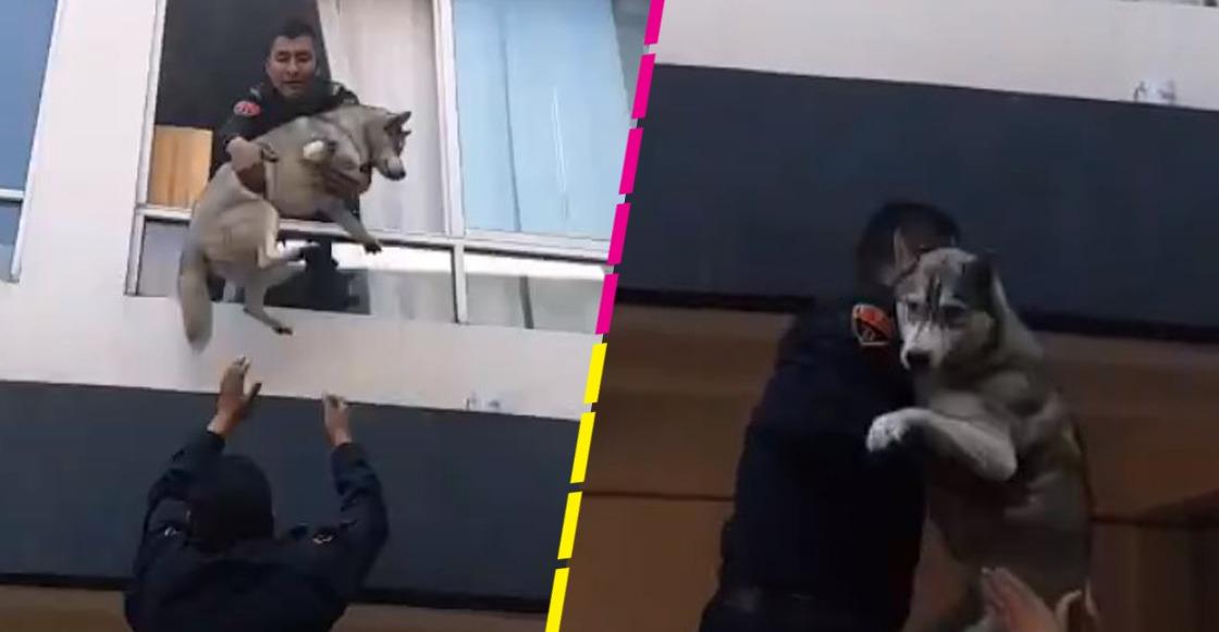 ¡Guau! Policías de la CDMX rescataron a un perrito de un incendio en la Benito Juárez