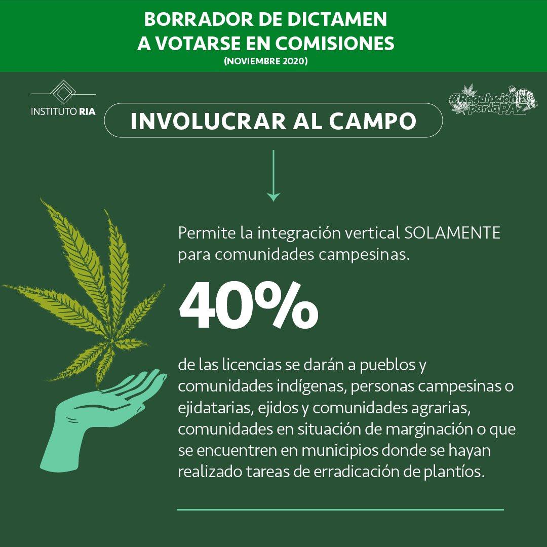 cannabis-campo-instituto-ria
