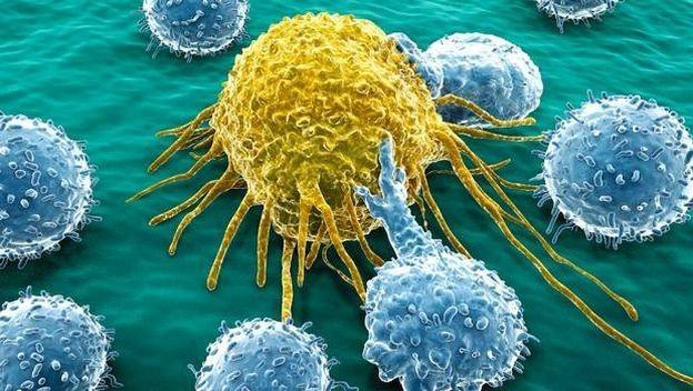 celulas-cancer
