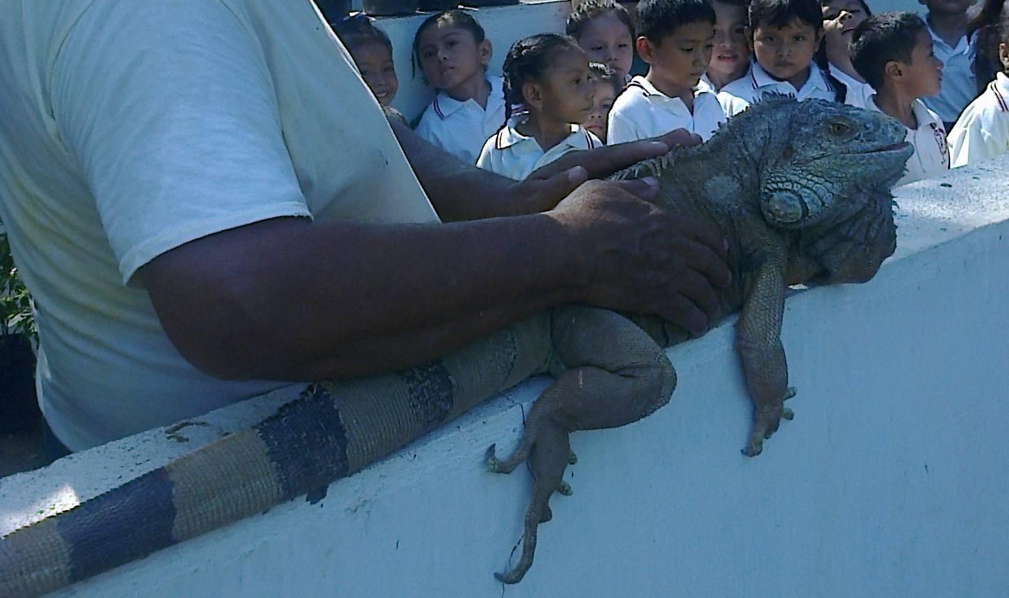 iguanas robo 2