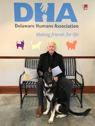 Major, el primer perrito rescatado que vivirá en la Casa Blanca gracias al triunfo de Joe Biden