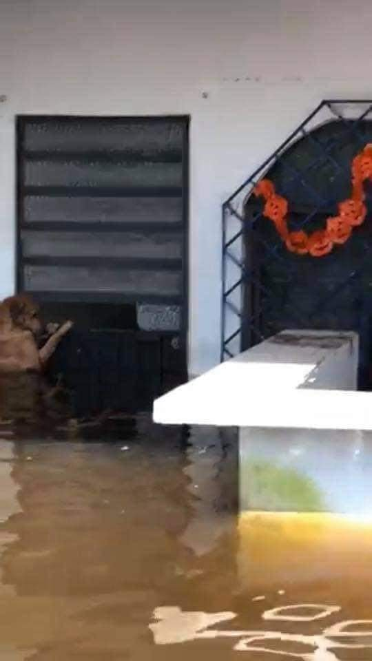 ¿El Hachi mexicano? Perrito es salvado de inundaciones en Tabasco y regresa a esperar a sus dueños