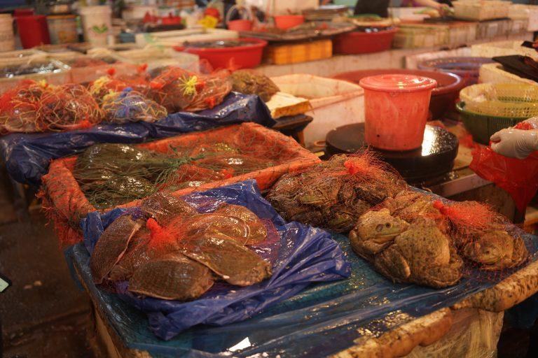 Todo sigue igual: Revelan imágenes del mercado de Wuhan donde nació el COVID-19