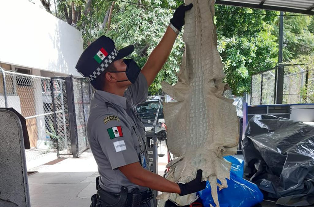 trafico-interpol-pieles-cocodrilo