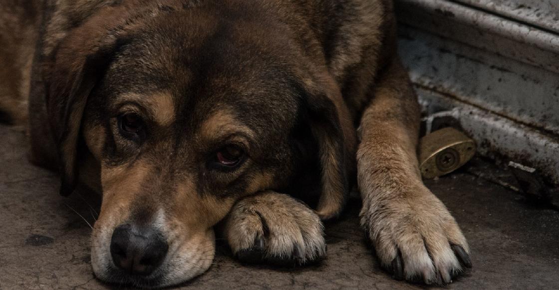 perritos-rescatados-iztapalapa