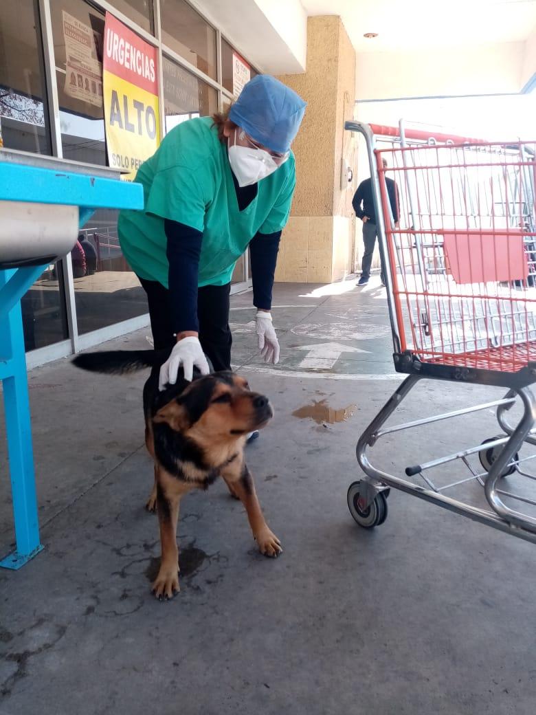 Covito: El perrito 'huérfano' que espera a su dueño que murió de coronavirus