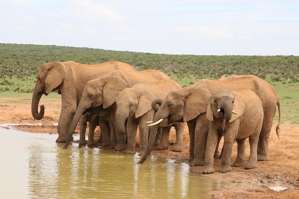 Ahora es posible rastrear y censar elefantes desde el espacio