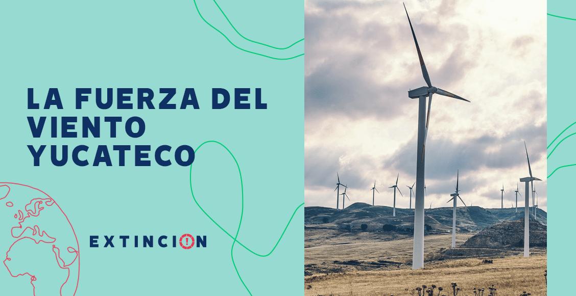 extincion-viento-yucatecto-apuesta-por-energias-limpias