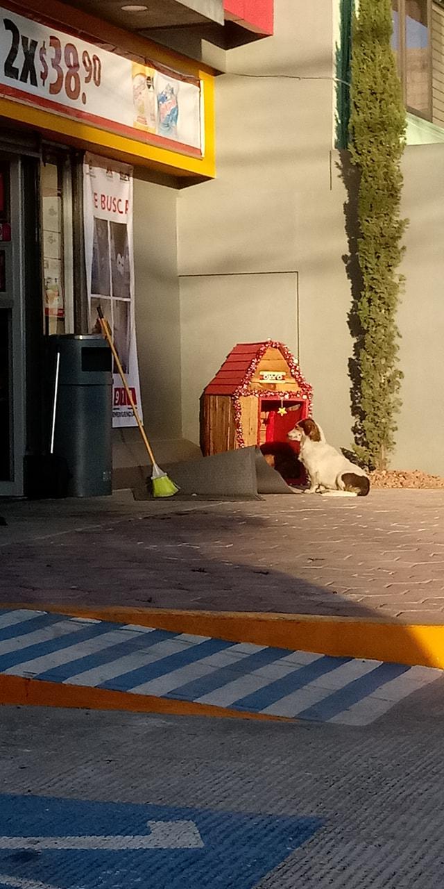 Migajón: El perrito que tiene su propia casa en un Oxxo