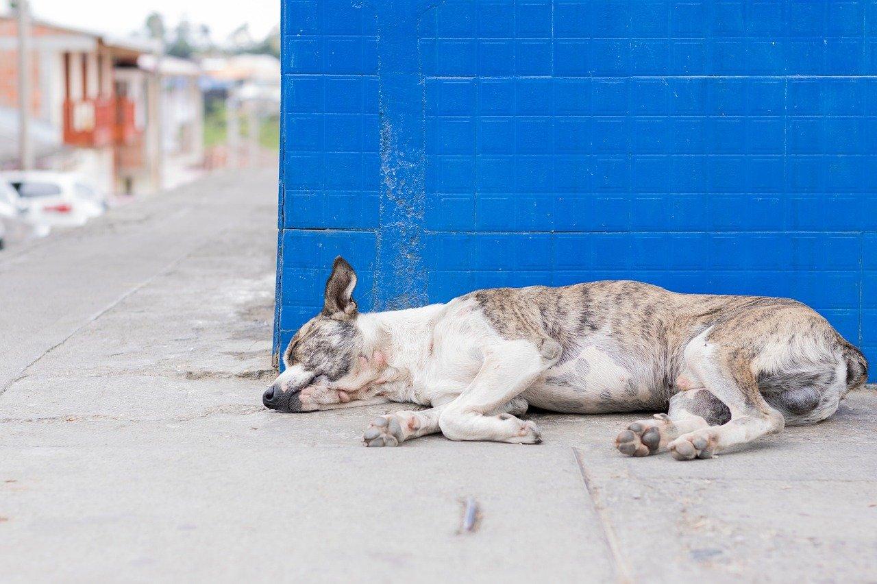 Ella es Vaca, la perrita que espera diario a su amigo en una central de camiones