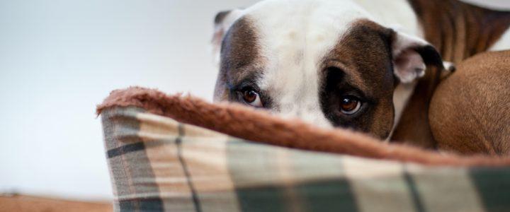perro-asustado