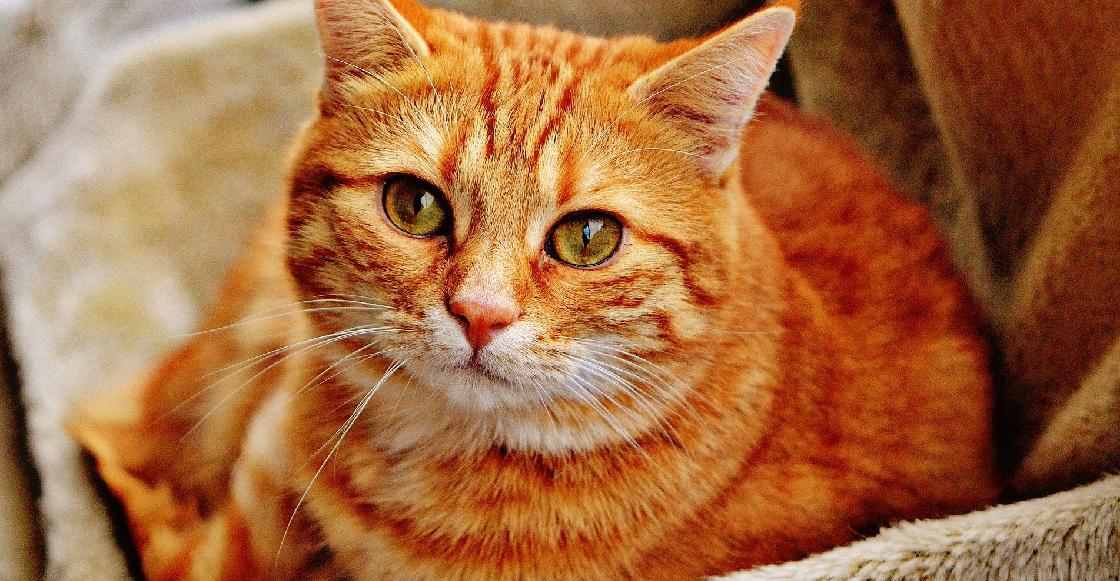 Arman fiesta de cumpleaños para el gato y 15 personas se contagian de COVID-19