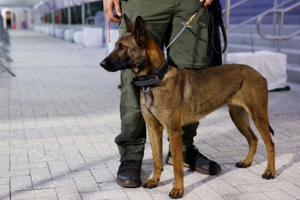 En Francia entrenan perros para detectar COVID-19 a través del sudor