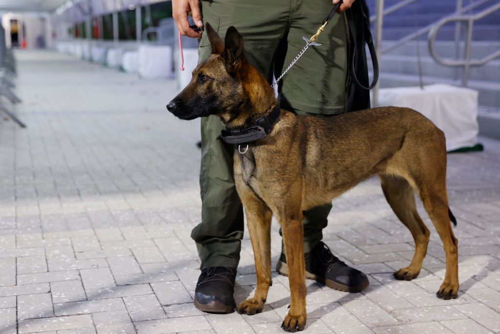 In France, they trained dogs to detect COVID-19 through sweat