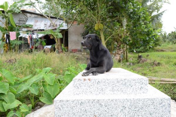 Mino: La perrita que no abandona la tumba de su pequeño dueño