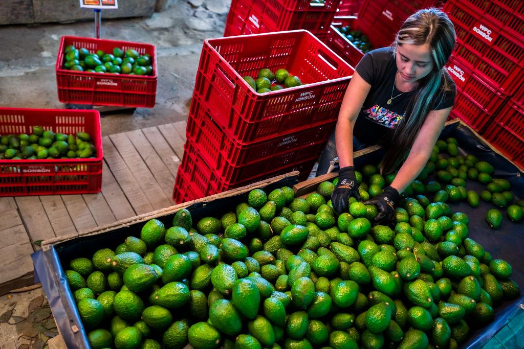 ¿Cuántas toneladas de aguacates exporta México para el Super Bowl LV?