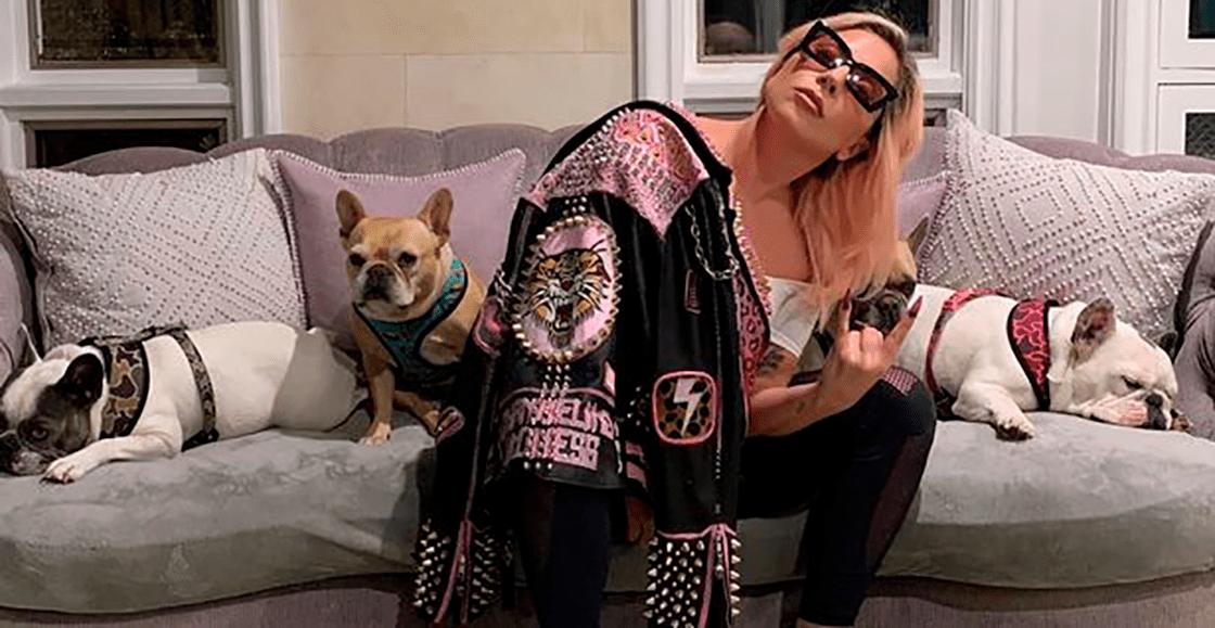 Atacan a paseador de los perros de Lady Gaga para secuestrar a sus mascotas