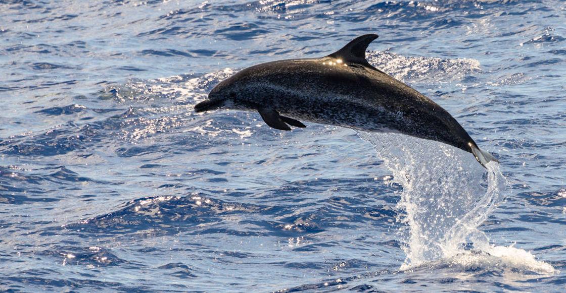 delfines-muertos-playas-ghana