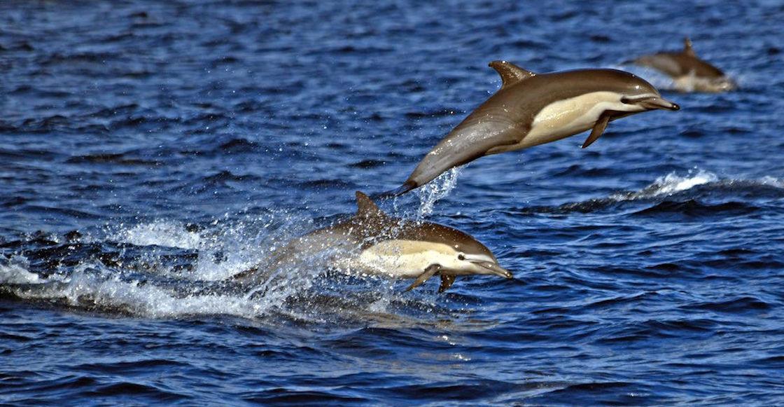 Dolphin Dead Beach Mozambique